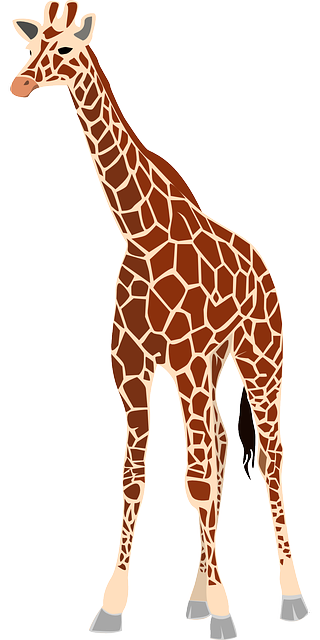 długość penis giraffe przycinaj siebie penisa